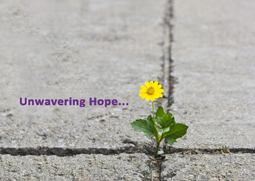 Unwavering Hope: Service